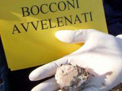 Bocconi avvelenati a Milano