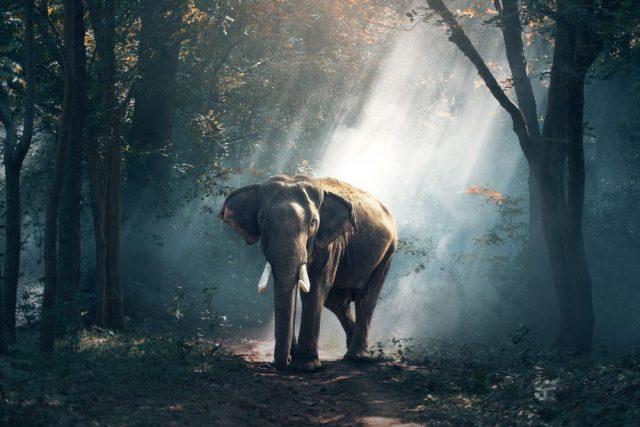 Lo zoo di Porta Venezia: Bombay, l'elefante indiano di Milano