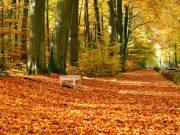 Milano, un nuovo parco è la proposta di Legambiente per la città