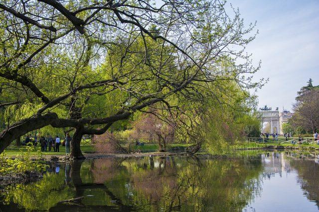 Milano, alberi monumentali