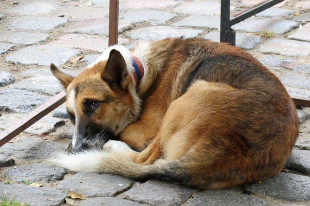 Milano, sterilizzazione animali domestici: gratis per i meno fortunati
