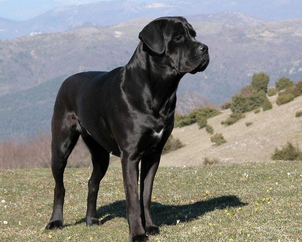 Milano-patentino-cani